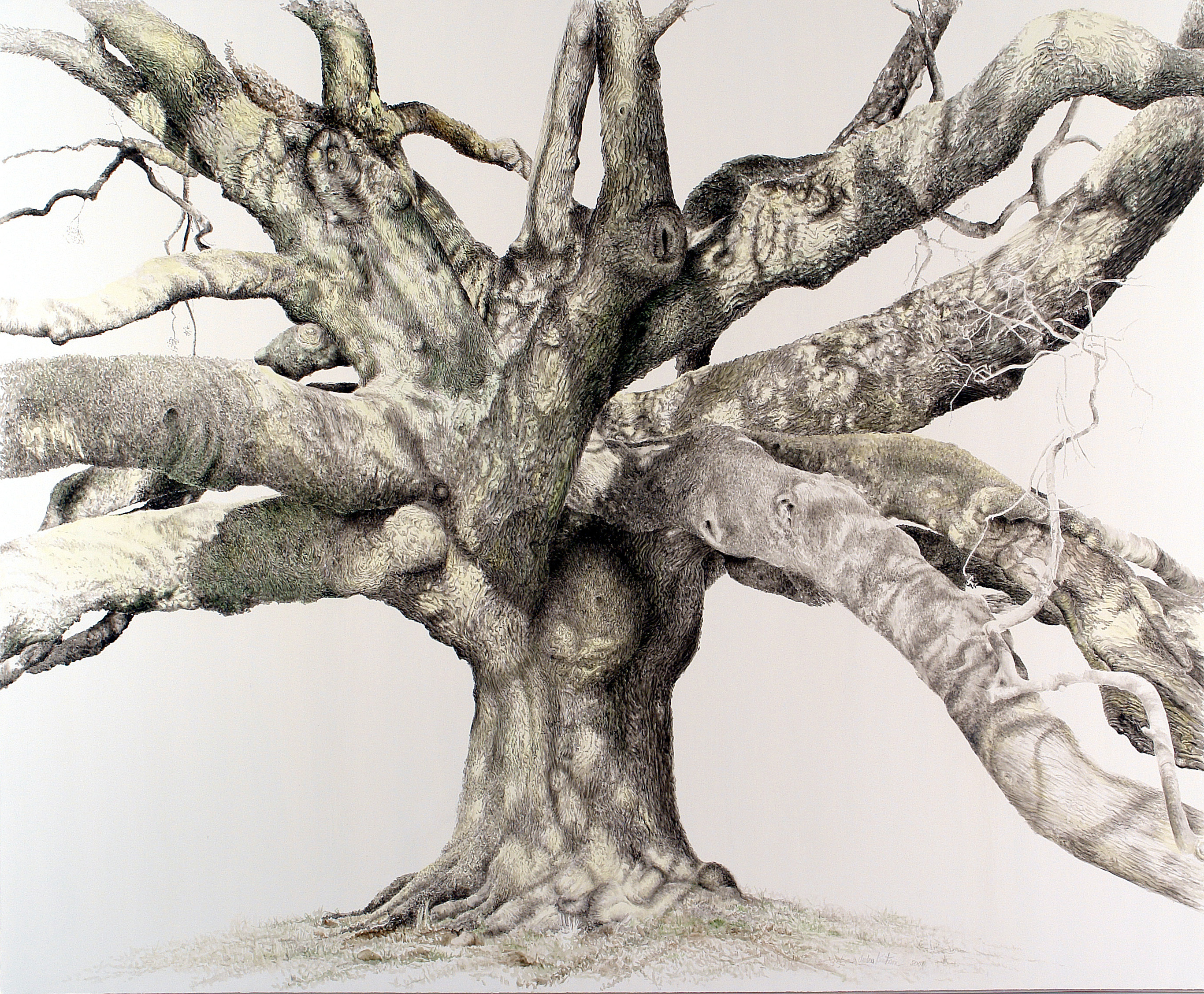 TREATY OAK -  U. of N. Florida 2006, 183 x 210cm